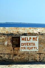 Cats Charity (Dedalomouse Photos) Tags: gallipoli salento italy italia europa europe muro wall puglia tommaso tommasoolmeda travel olmeda dedalomouse acque acqua water gato gatto cat viaggio viaje