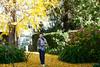 Mi árbol favorito (leograttoni) Tags: jardín garden árbol tree ginkobiloba hortensia hoja leaf yo me airelibre laplata buenosaires