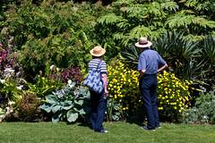 Straw Hats Admiring the  Blooms (Simon Downham) Tags: straw hat hats garden bloom blooms june flowers peaceful tranquil dsc8478 brighstone england unitedkingdom gb