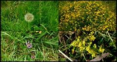 Summer Wildflowers.