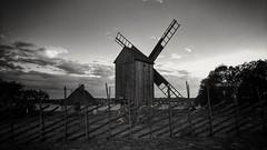 Windmill @ Angla, Saaremaa, June 22nd 2017. #windmill #veski #tuulimylly #angla #saaremaa #saarenmaa #viro #estonia #jaani #juhannus #midsummer #bw #blackandwhite #oneplus3t (Sampsa Kettunen) Tags: blackandwhite oneplus3t estonia juhannus saarenmaa saaremaa jaani veski windmill angla midsummer viro tuulimylly bw