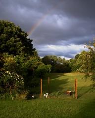 (T R Hegwood) Tags: rainbow garden goodlight goldenhour