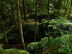 Beartown Cool (rcvernors) Tags: beartowncool rickchilders rcvernors beartownstatepark wvstatepark westvirginia forest fern lush roughterrain green woods mountains boardwalk