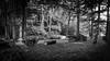 Wood 1 (FSR Photography) Tags: wald forrest canon canondslr canon400d bw blackandwhite blackwhite sw schwarzweis schwarzweiss bäume holz holzstamm monochrome monochrom light licht wood trees tree fsr fsrphotography