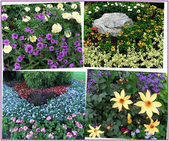 Stanley Park Flower Beds (FernShade) Tags: vancouver stanleypark flowerbeds flowerbeddesign park nature landscaping garden displaygarden