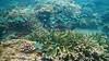 Underwater life near Rum, Pulau Tidore (Sekitar) Tags: indonesia maluku utara malut provinsi ternate pulau island moluccas molukken insel underwater life rum tidore batu karang coral earthasia