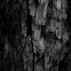 Quiet Corners 004 (noahbw) Tags: d5000 nikon ryersonwoodsforestpreserve abstract blackwhite blackandwhite bw dark darkness forest monochrome natural noahbw quiet shadow square still stillness summer treebark treetrunk trees woods