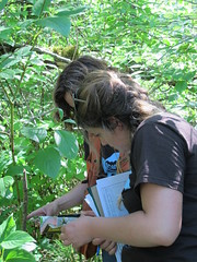 Participants ID plants within their plot (BC Wildlife Federation's WEP) Tags: wetlandkeepers yellowflagiris bcwf workshop education wep wetlandseducationprogram invasive species control research wetland bcwildlifefederation cheamlake cheam rosedale chilliwack