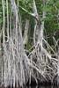 Black River, Jamaica (supe2009) Tags: jamaica blackriver unspoiled rawbeauty river crocodiles