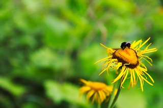 Bumblebee'ziness