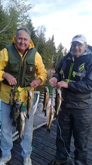 A stringer of fish to clean up (Rainbow Point Lodge) Tags: rainbowpointlodge fishing trophywalleye walleye crappie perch perraultfalls perrault lake perraultfallsadventurearea rainbowcamp trophy sunset country ontariofishing ontariofishinglodge canadafishing