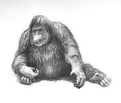 Orangután (Marcos Telias) Tags: arte dibujo boceto sketch drawing monkey orangutan orangután illustration ilustración bosquejo artista artist ballpoint bolígrafo pen lápiz fantasy