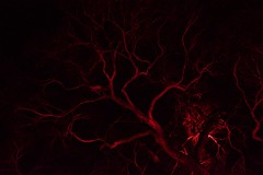Come Closer (Aviator195) Tags: nikon nikond7100 d7100 night nighttime nightphotography light dark vivid vivid2017 vividsydney sydney sydneybotanicalgardens botanical botanicalgardens gardens city australia winter