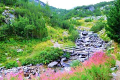 Somewhere in Pirin Mountains (mmalinov116) Tags: pirin mountain nature environment river green bulgaria българия планина пирин