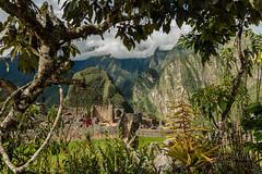 Machu Picchu -_DSC0628