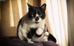 Fist bump! (GaboUruguay) Tags: sleep sleepy cat gato pet canon profile portrait retrato perfil felino minino kitten sleeping durmiendo mascota animal domestico carnivora paw fist pose bump