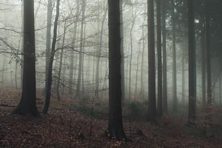 Misty Winter Day in the Eifel