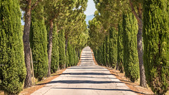 Tree tunnel (hjuengst) Tags: umbrien umbria lasaporita panicale driveway allee alley umbrellapines cypress pine beautiful lightandshadow tunnel
