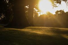 Hazy days of summer (A Costigan) Tags: sunlight haze