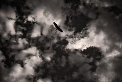 Great Blue Heron (MikeSpeaks) Tags: helios442 greatblueheron washingtondc blackandwhite sky clouds flight flying bird silhouette