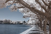 Lake Constance - Infrared shades (gporada) Tags: bodensee lakeconstace lake see wasser infrared d40 water sunny sonnig