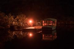 1B1A4611.jpg (Brendon & Keryn) Tags: zealandia night newzealand wellington winter northisland nighttour