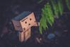 Danbo and the fern. (Matt_Briston) Tags: danbo robot fern woods nature matt cooper nikon d90
