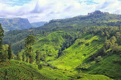 Tea plantation-, Kandy, Sri Lanka (cattan2011) Tags: landscape landscapephotography nature naturephotography natureperfection naturelovers mountains mountainscape teaplantation kandy srilanka travel travelphotography traveltuesday travelbloggers