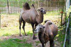 IMG_0598.jpg (wfvanvalkenburg) Tags: familie ouwehandsdierenpark