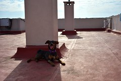 loki on the roof (emanuelzalazar) Tags: 我的狗 狗 天 云彩 云 cloudy clouds nubes cielo sky perros mascota