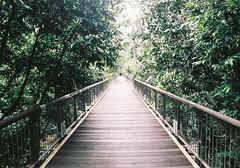 Forest Brigde