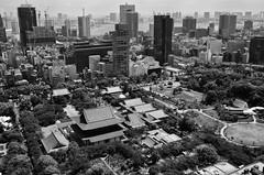 Not so Tiny Tokyo (Kim Yokota) Tags: tokyotower tokyo japan 2017 observationdeck nikond7000 nikonafsnikkor24mmf14ged blackandwhite city cityscape aerialview