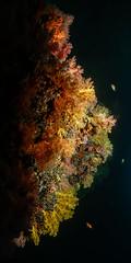 Colore sotto al mare. Under water  colors. (omar.flumignan) Tags: barrieracorallina reef colore colors maldive maldives holiday vacanza arisouth arisud atollo atoll