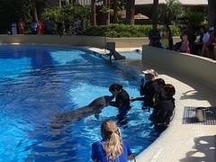 DSC00639 (jrucker94) Tags: vegas water dolphin swimming show secretgarden