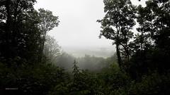 Hohe Heide, Elten (bcbvisser13) Tags: bomen bos uitzicht panorama view mist hoheheide elten emmerich nordrijnwestphalen germany deutschland eu bcbvisser13