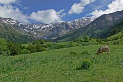 nubes en Pirineos (Luis Mª) Tags: pirineos valledepineta nieve vacas nubes afiiae montaña paisaje