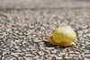 Snail 3 (elzauer) Tags: laufen bayern germany de macro animalantenna animalshell animalthemes animalsinthewild colourimage day differentialfocus elevatedview imagefocustechnique outdoors photography street textured wildlife snail
