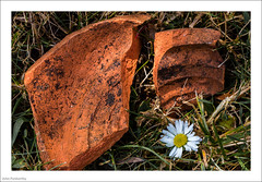 Broken - Epitaph For A Pot 177/365 (John Penberthy LRPS) Tags: 105mm 26jun17 365the2017edition 3652017 d750 day177365 flowersandplants johnpenberthy nikon broken closeup macro macromondays pot pottery