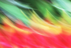 TROPICAL FLOWER BLUR (dayvmac) Tags: color flowers blur abstract flower motion movement pan