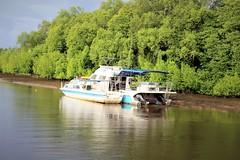 Nanamun Trip Kota Belud Sabah (MitchellC1014) Tags: nanamun kotabelud tourism firefly monkey rivercruise sunset mountkinabalu sabah canoneos newbie rampayan