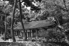 Beauty of Korea (withcamera) Tags: koreanstylehouse pinusdensiflora koreanredpinepinus beautyofkorea seoul nikon nikondf 24~70lens namsan southkorea 한국의미 한옥 서울