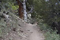 DSC_0333 (Six Sigma Man (2.700.000 views)) Tags: bigbear california bigbearlake cougarcresttrail nikon nikond3200