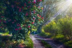 le long du chemin (ma03ri09n50) Tags: fleurs chemin rayondesoleil printemps nature cielbleu path ray sunshnie