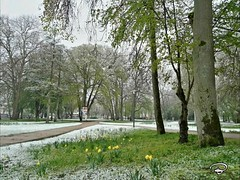 APRIL WEATHER #easter #Ostern #april #weather #snow  #trees #flowers #Schnee #park #Kurpark #Photographie #photography (benicturesblackwhite) Tags: park easter photography kurpark schnee april snow weather photographie flowers trees ostern