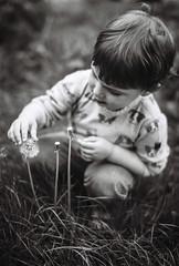 Le Thomas (tripowski) Tags: nikon f80 nikonf80 film sigma 50mm 5014 f14 ilford ilfordpanf panf black white mono monochrome blackandwhite bw dandelion plant portrait son boy