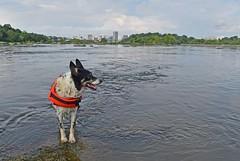 JR 70417_0806 (sandy's dad) Tags: 2017 james river ova