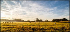 Wistow (Peter Leigh50) Tags: sheep landscape leicestershire farmland countryside field rural mist early morning sunshine