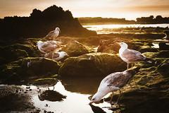 Houses of the Oiseaux (Mateus Carvalho |) Tags: 2017 culture essaouria kingdomofmorocco maghreb maroc marrocos nikond800 nikonf282870 northafrica travel birds sunset light sun