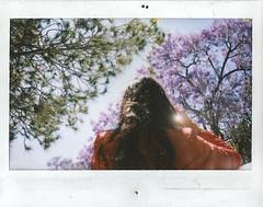 Sam (Carlos Yamil Neri) Tags: bugambilias primavera instax