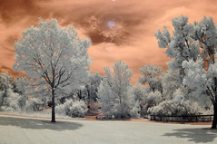Secrets From the Sky (BluAlien) Tags: nikon d90 ir infrared 665nm converted sooc tokina 1017mm fisheye landscape trees sky clouds red